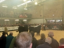 Perth Bull Sales at Stirling October 2009 Judging