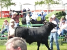 Prize Winning Bull